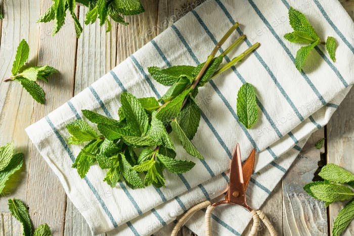 Raw Green Organic Fresh Mint Leaves