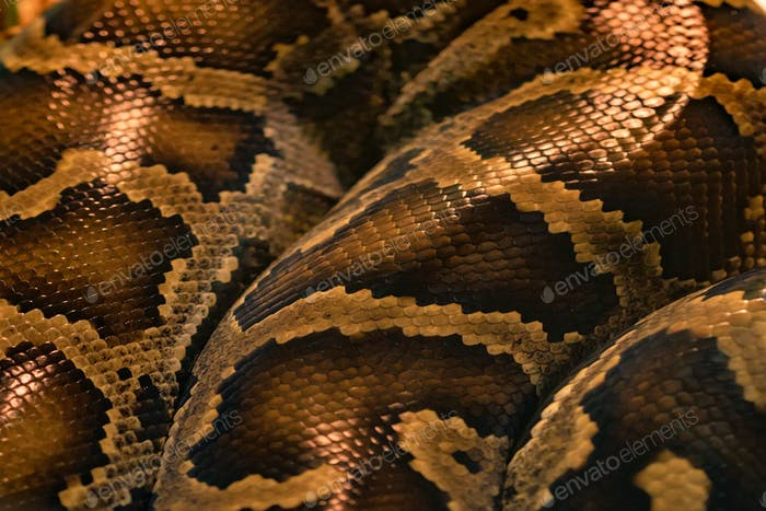 Snake skin pattern close up