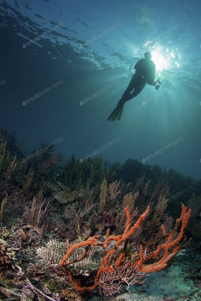 diver over a healthy reef