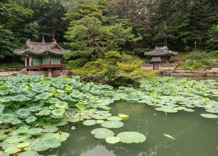 Pond with water lilies in amazing park