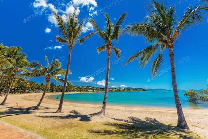 Heißer Tag am Sandstrand mit Palmen, Airlie Beach, Whitsunday
