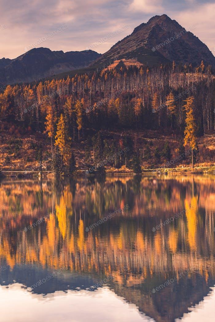 Colores de otoño en el Bosque sobre el lago en las Alto montañas