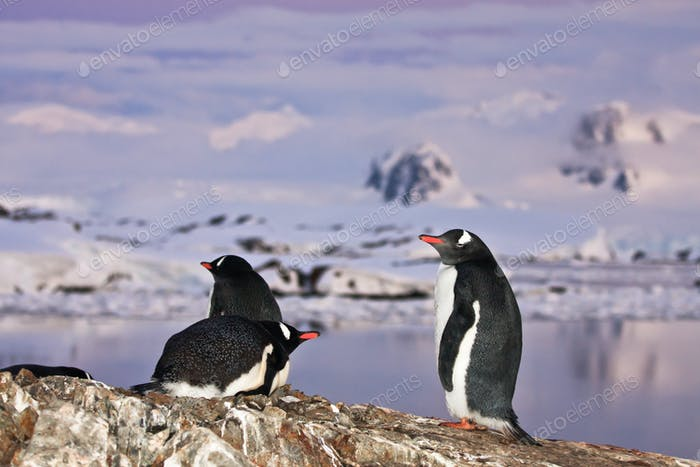 penguins standing on a mountain