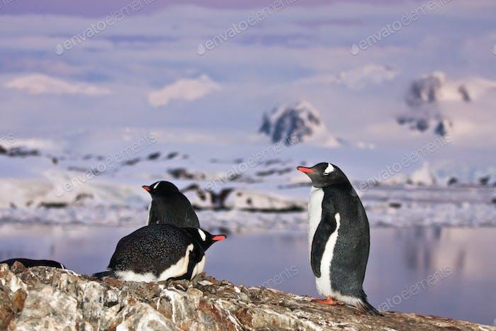 Pinguine stehen auf einem Berg