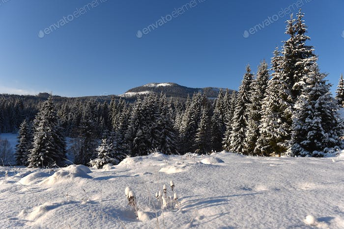 Winter wonderland. Snowcapped mountains and snow covered trees