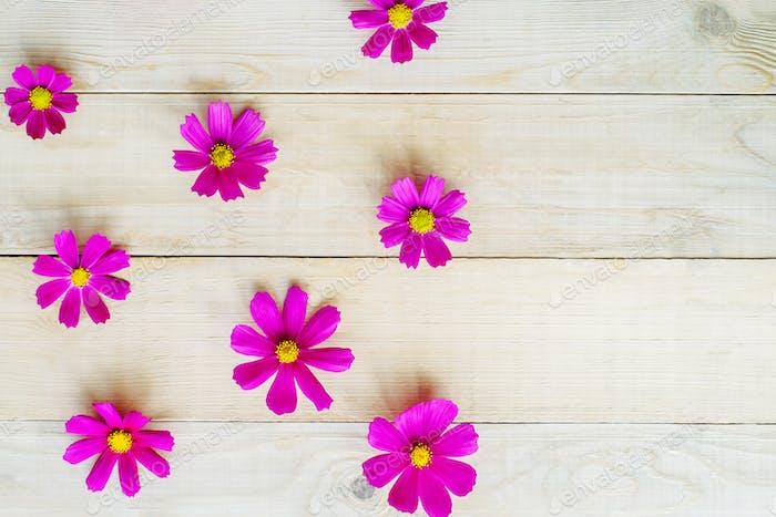 Muster von Kosmos Blumen