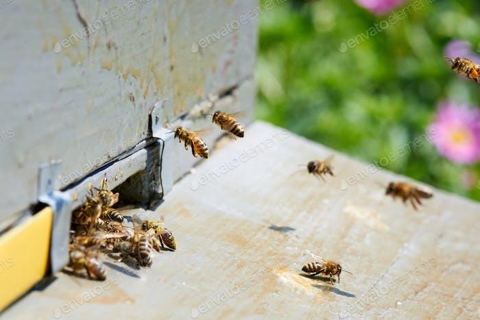 Lebendiger Bienenstock