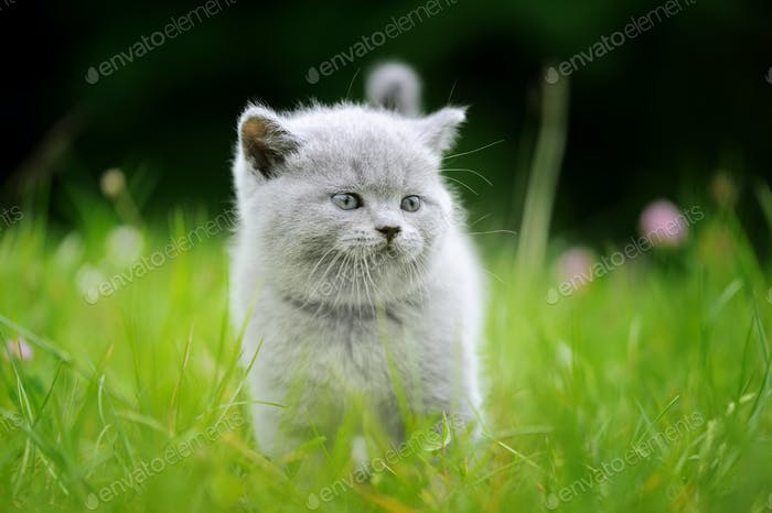 Cute kitten in the green grass
