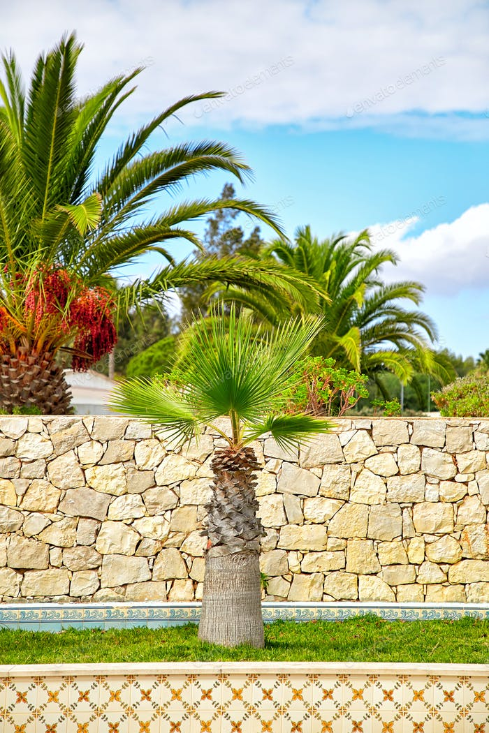 Palm trees in portuguese garden