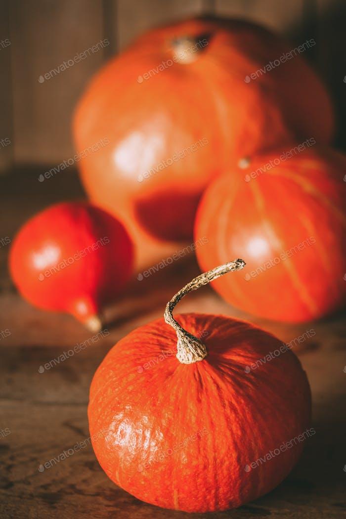 Pumpkins On Grunge Wooden Backdrop Background