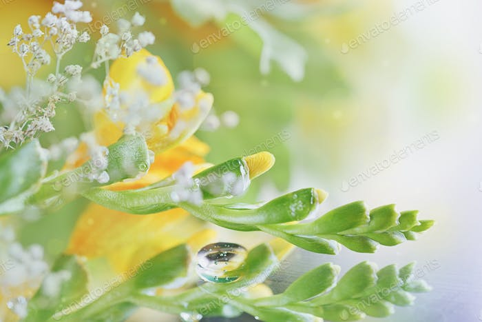 Beautiful abstract light and blurred floral background