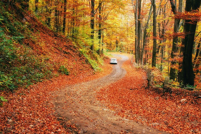 Car on a forest path. Carpathians. Ukraine, Europe