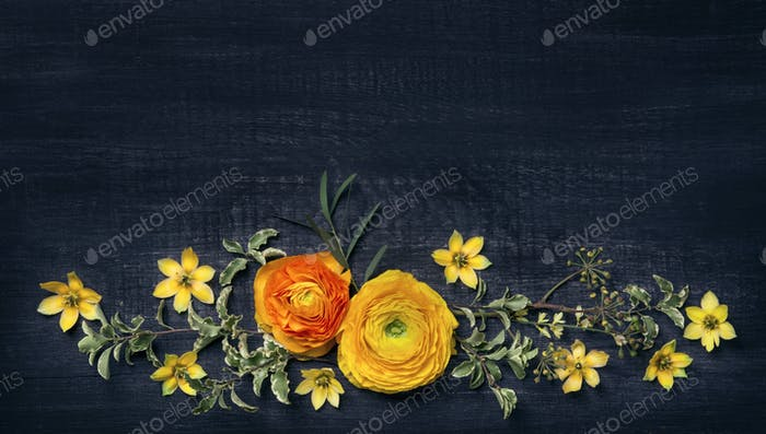 Yellow ranunculus on black background