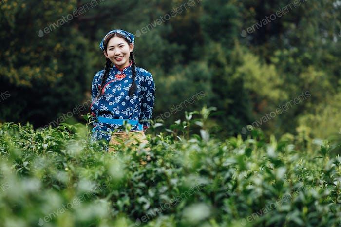 Chinese girl picking tea leaves