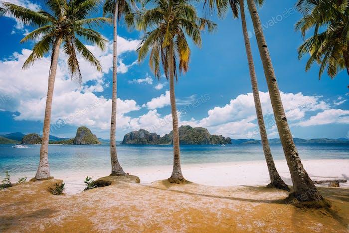 El Nido Beach Paradise: Pinagbuyutan Island with palm trees. Palawan, Philippines