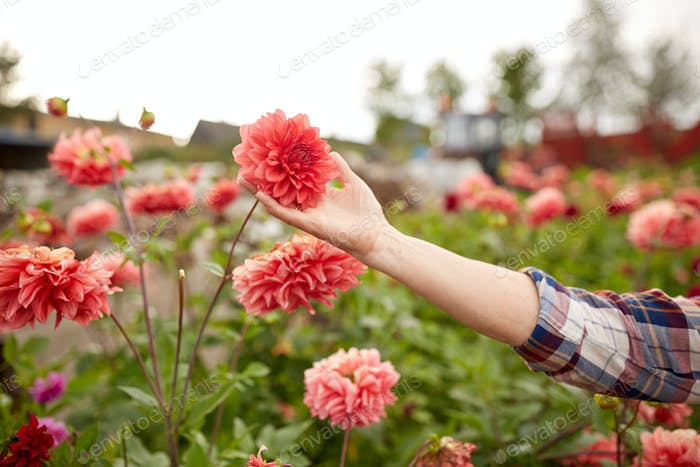 hand of senior woman with flowers at summer garden