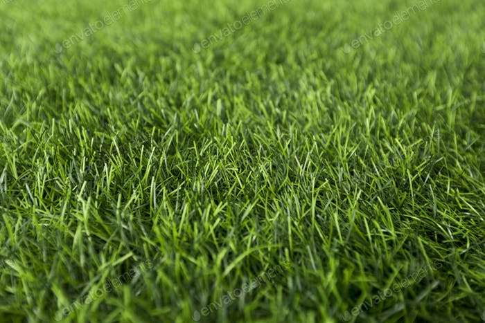 Frisches Frühjahr oder Sommer nasses Gras im Park, grüner Hintergrund