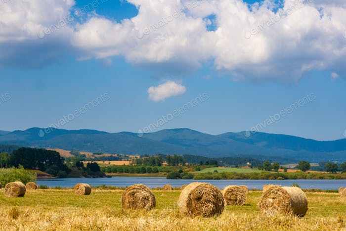 Rural summer landscape with bales of hay