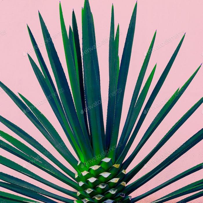Palm tree on the pink. Tropical design minimal fashion