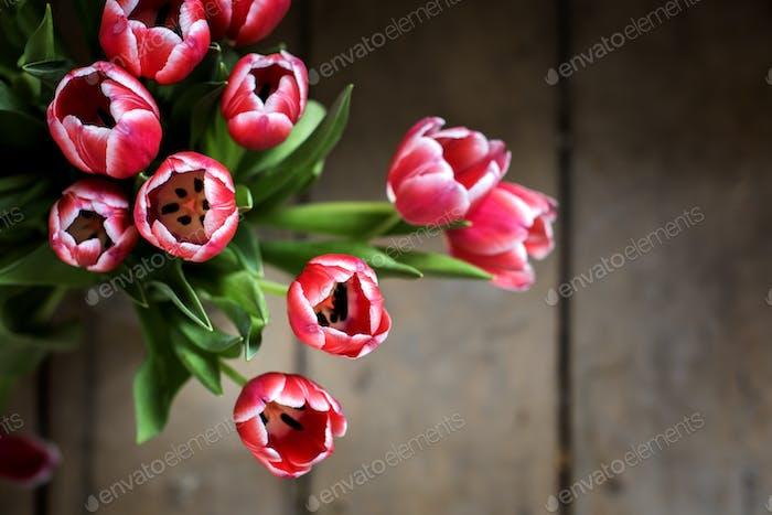 Fresh Tulips Flowers Arrangement Nature Refreshment Background
