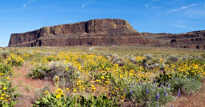 Spring Wildflowers Steamboat Rock Eastern Washington State