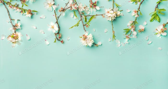 Spring almond blossom flowers over light blue background, wide composition