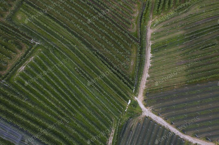 top view of Trentino apple plantations in Italy