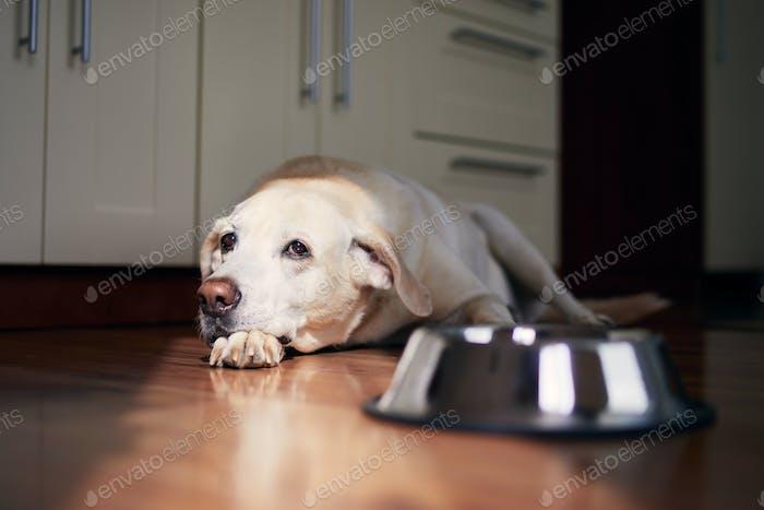 Dog with sad eyes waiting for feeding