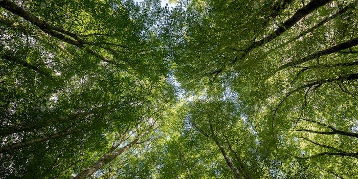 Green Canopy