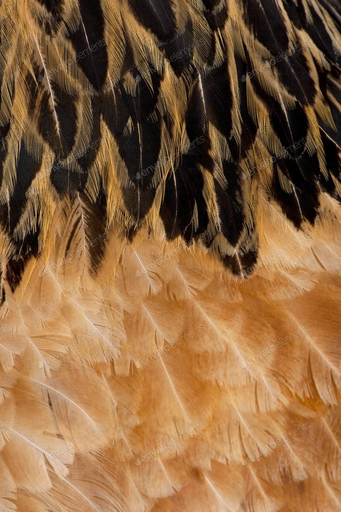 Close-up on feathers
