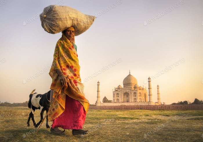 Indian Woman Carrying on Head and Goats near the Taj Mahal