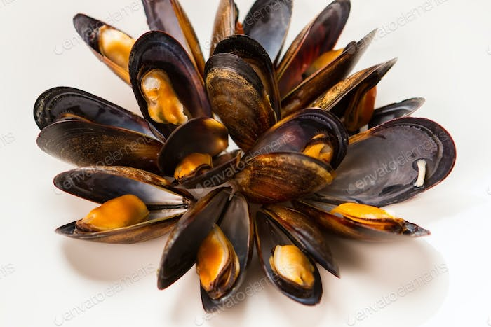 Cooked mussels on white background