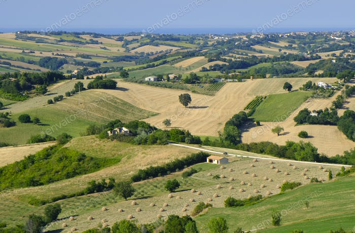Summer landscape in Marches near Barchi
