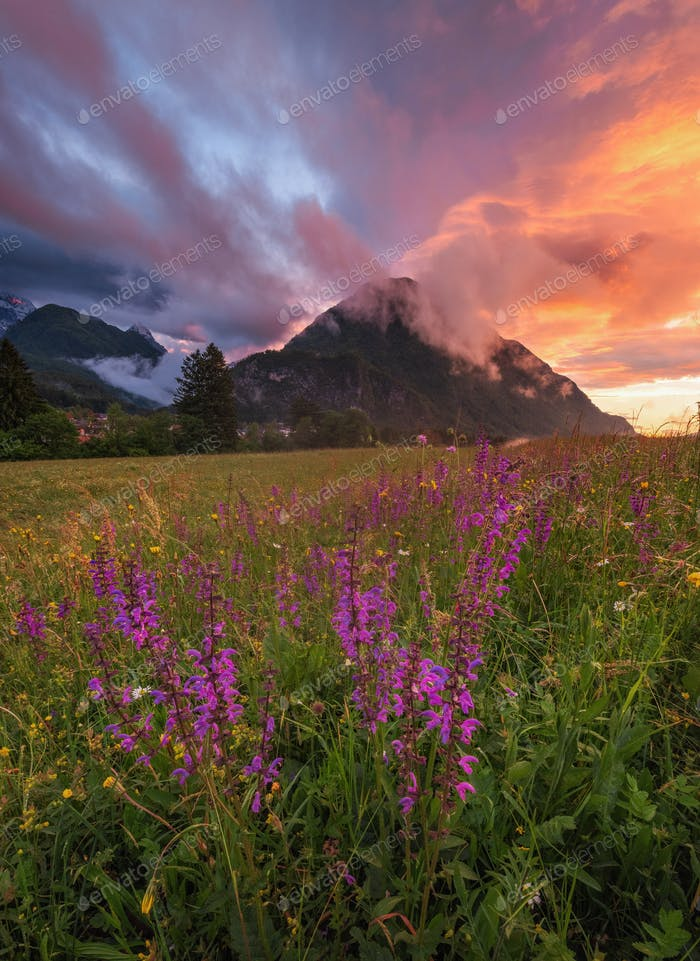 Flowers under the mountain on a vivid sunset
