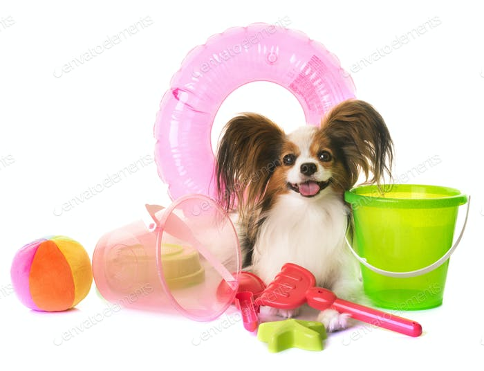 papillon dog in holidays