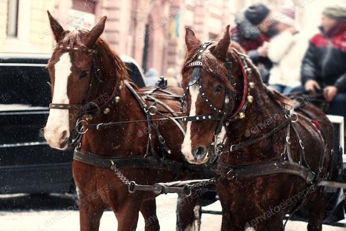 Pferde im Schlittenfahren im Winter verschneite Stadt Straße in Europa
