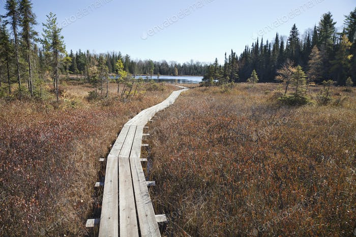 Wooden walkway leading to small trout lake in northern Minnesota during autumn