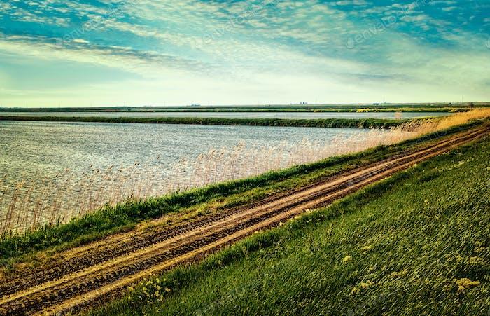 Carretera rural que pasa por los campos de arroz
