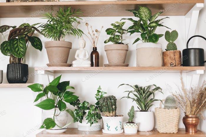 Cactus, calathea, peperomia,dumbcane, dracaena, ivy, palm, sansevieria