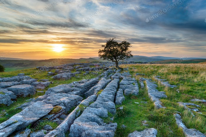 Sunset over a windswept Hawthorn tree growing out of a limestone