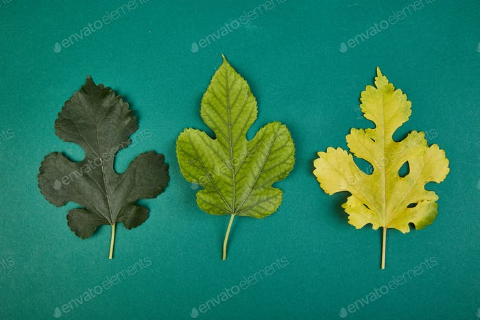 Creative layout of colorful green and yellow autumn leaves