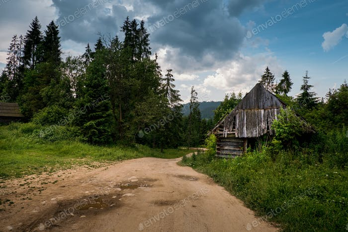 Old log cabin in the forest near road