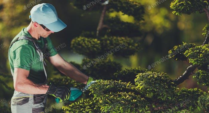 Männer Shaping Gartenbäume