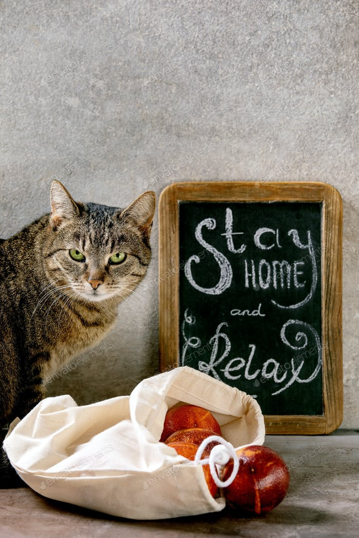 Cat stay home concept