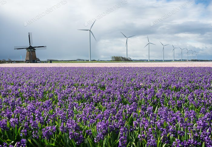 Energy by modern and traditional windmills and flowers
