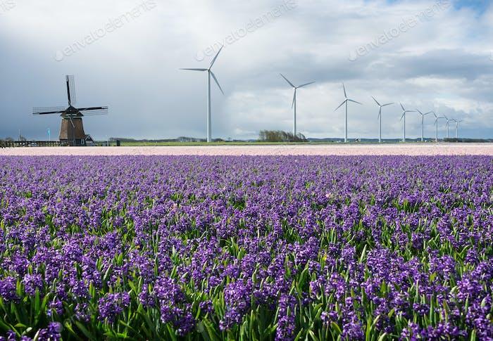 Energie durch moderne und traditionelle Windmühlen und Blumen