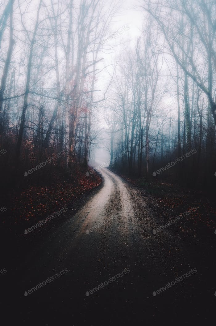 A foggy dirt road