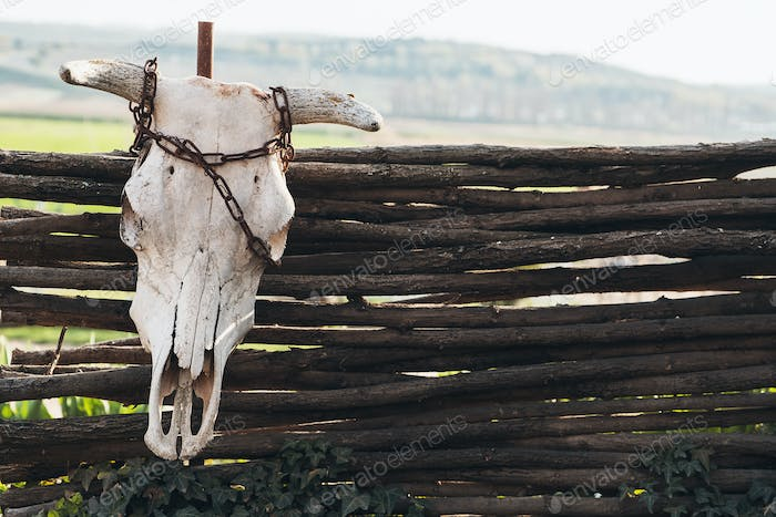 An ox skull fixed with chain on the farm fence