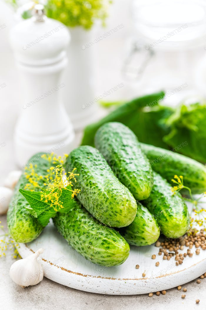 Fresh cucumbers and ingredients for conservation. Preparation marinated salted cucumbers