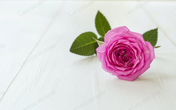 Soft purple flower background